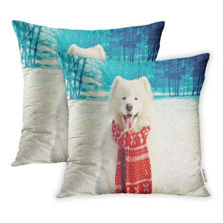 YWOTA Animal Happy White Samoyed Dog on Snow in Winter Day Funny Pillow Cases Cushion Cover 16x16 inch ()