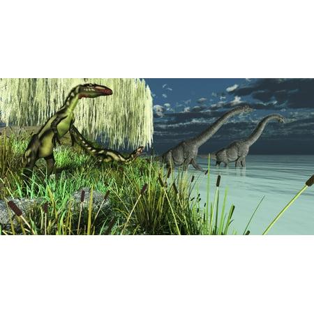Brachiosaurus Poster - Small Dilong dinosaurs watch as two Brachiosaurus dinosaurs wade across a lake Poster Print