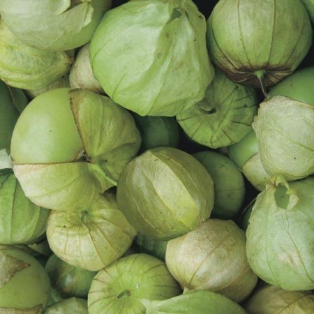 Tomato Tomatillo Toma Verde Great Heirloom Garden Vegetable 50 (Best Hybrid Tomato Seeds In India)
