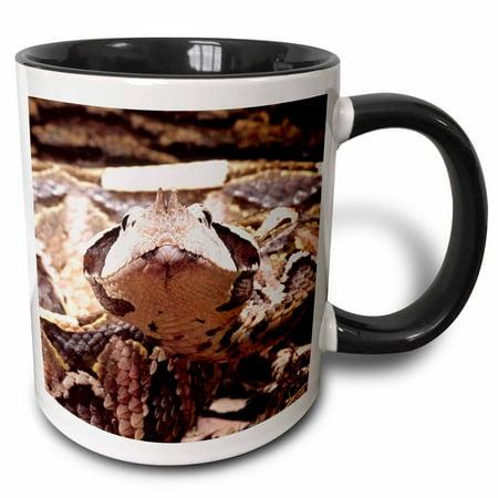 3dRose West African Gaboon Viper snake - NA02 DNO0436 - David Northcott - Two Tone Black Mug, 11-ounce