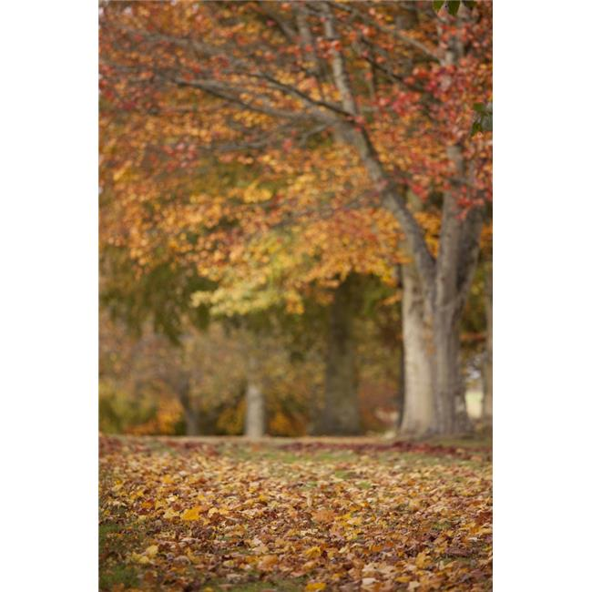Northumberland England - Autumn Colors on the Trees Poster Print, 24 x 38 - image 1 of 1