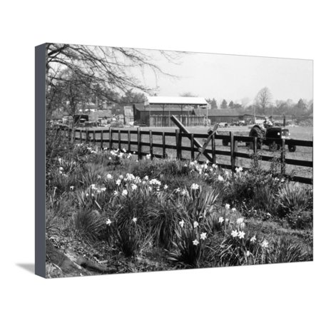 Spring Farming Scene Stretched Canvas Print Wall Art