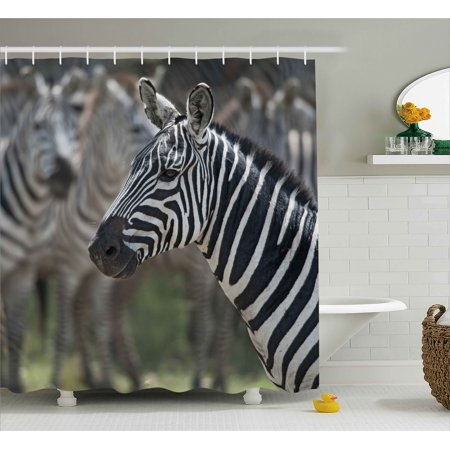 African Shower Curtain, Zebra in Serengati National Park Safari Animal in Desert Picture, Fabric Bathroom Set with Hooks, 69W X 70L Inches, Black White Reseda Green, by Ambesonne