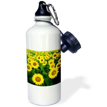 3Drose Sunflower Field  Yellow Flowers  Popular Image   Sports Water Bottle  21Oz