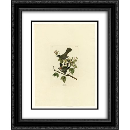 John James Audubon 2x Matted 20x24 Black Ornate Framed Art Print 'Plate 128 Cat Bird'