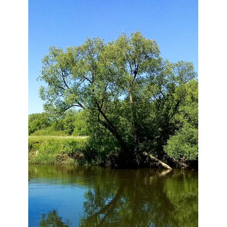 LAMINATED POSTER Tree Nature Green Blue Park Forest Landscape Poster Print 24 x 36