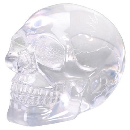 Small Translucent See Through Clear Human Skull Head Figurine Skeleton New](Small Plastic Skeletons)
