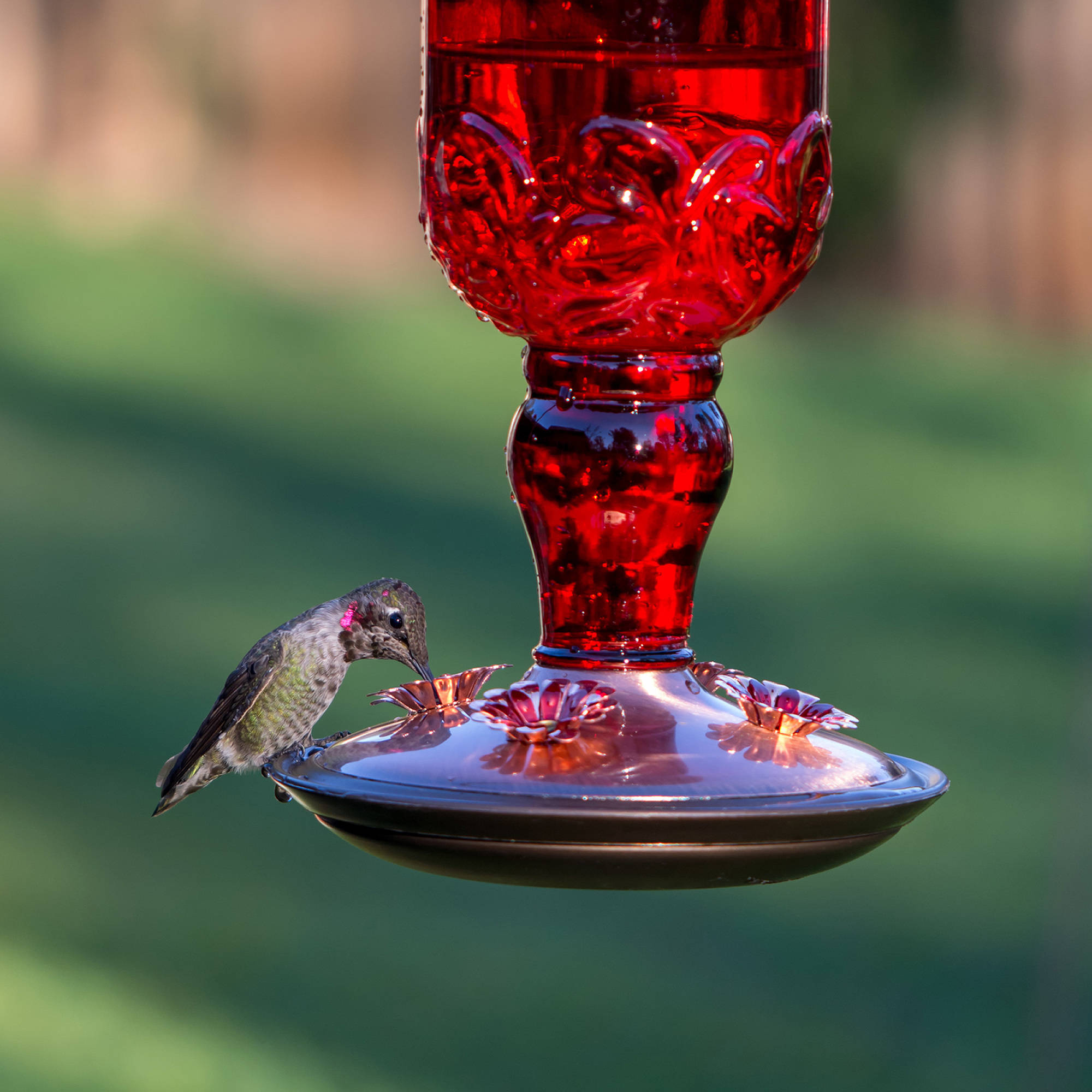 desert feeder steel feeders reviews wayfair outdoor decorative hummingbird pdx