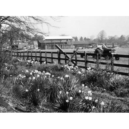 Spring Farming Scene Print Wall Art