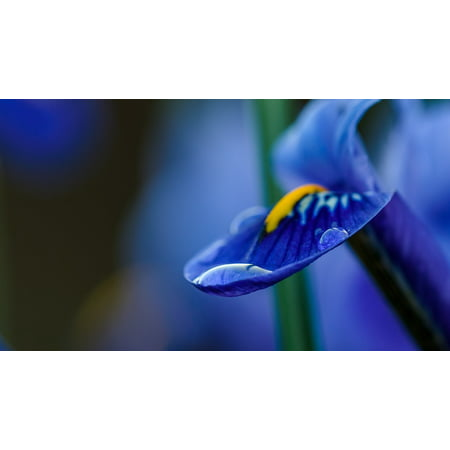 LAMINATED POSTER Petal Drops Plant Garden Water Flower Blue Poster Print 24 x 36