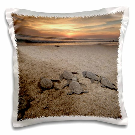 3dRose Mexico, Boca del Cielo, Olive Ridley Sea Turtle - SA13 RGO1318 - Russell Gordon - Pillow Case, 16 by 16-inch Design 16' Olive Boat