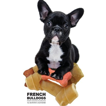French Bulldogs Pocket Monthly Planner 2018: 16 Month Calendar (Paperback)