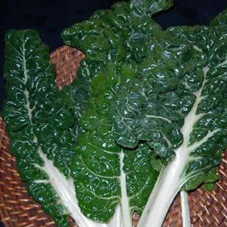 Swiss Chard Garden Seeds - Fordhook Giant - 4 Oz - Non-GMO, Heirloom Vegetable Gardening & Microgreens