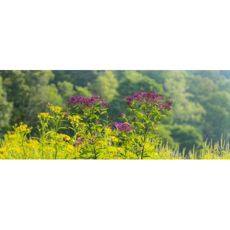 Summer Weeds Cuyahoga Valley National Park Cuyahoga County Ohio Usa Poster Print
