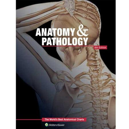 Anatomy and Pathology 6th Edition Book (Best Ct Anatomy App)