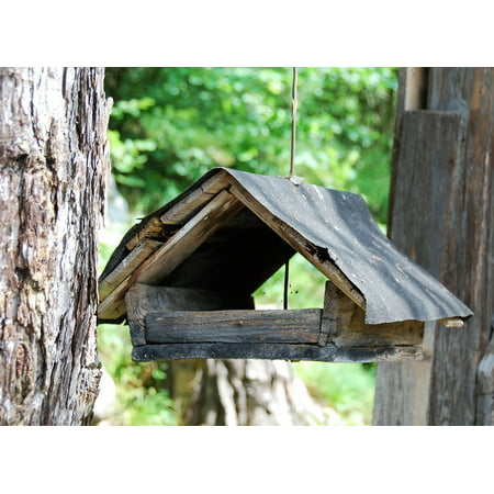 Canvas Print Woods Bird Feeder Old Stretched Canvas 10 x 14