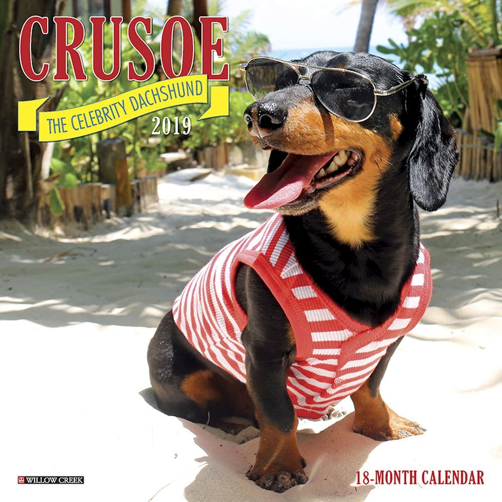Crusoe the Celebrity Dachshund Mini Wall Calendar, Dachshund by Calendars