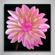 Metal Artscape Dahlia Graphic Art Plaque in Pink