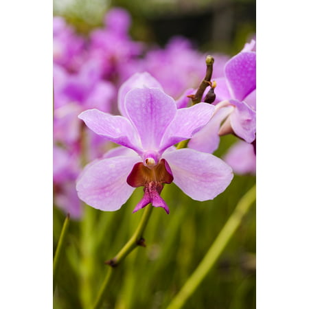 Orchid Spa (Canvas Print Flower Orchid Spa Nature Natural Therapy Purple Stretched Canvas 10 x 14)