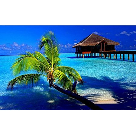 Tropical Paradise Poster Amazing Beach And Palm Tree And Ocean Home Shot New 24X36