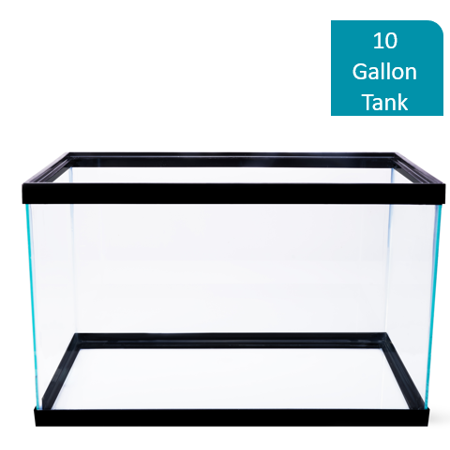 Aqua Culture 10-Gallon Glass Aquarium ()