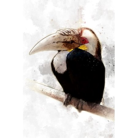 Rainforest Animal Pictures - LAMINATED POSTER Animal Rainforest Fauna Hornbill Tropical Bird Poster Print 24 x 36