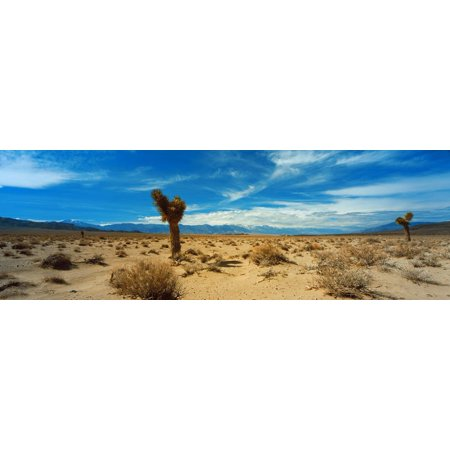 Joshua Tree in a Desert, Mojave Desert, California, USA Print Wall Art By Panoramic Images