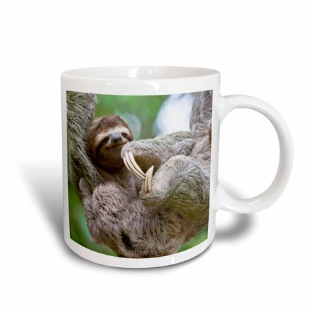3dRose Brown-Throated Sloth wildlife, Corcovado Costa Rica - SA22 JGS0021 - Jim Goldstein, Ceramic Mug, 11-ounce