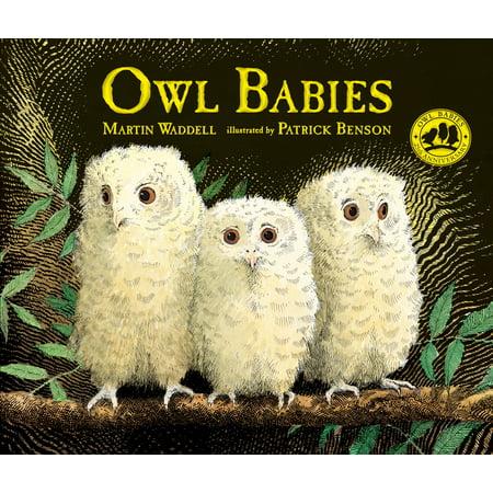 Owl Babies ()