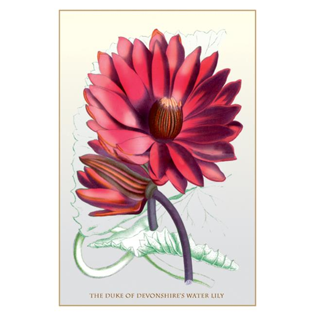 Buy Enlarge 0-587-11551-3P20x30 Duke of Devonshires Water Lily- Paper Size P20x30