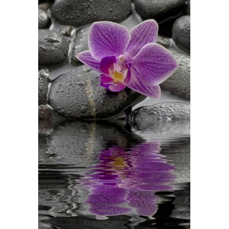 Orchid Blossom on Black Stones, Water, Reflection Print Wall Art By Uwe Merkel