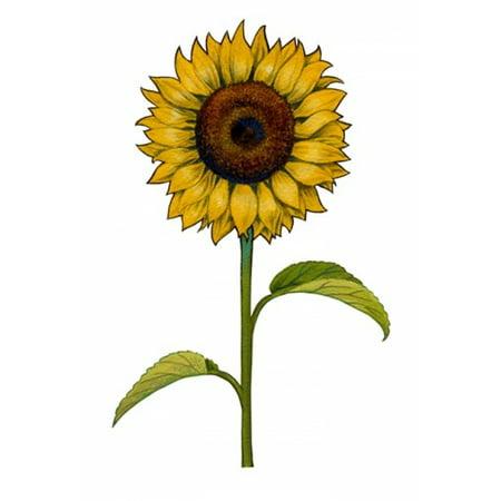 Image of Floral Sunflower Canvas Art - Christine Kerrick (21 x 30)