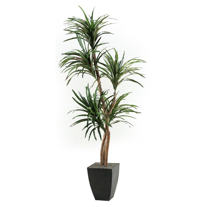 D & W Silks Dracaena Tree in Planter
