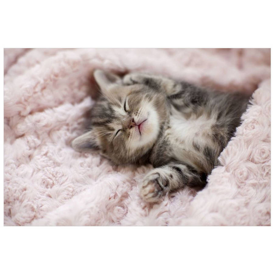 Kitten Sleeping On Towel by Eazl Cling