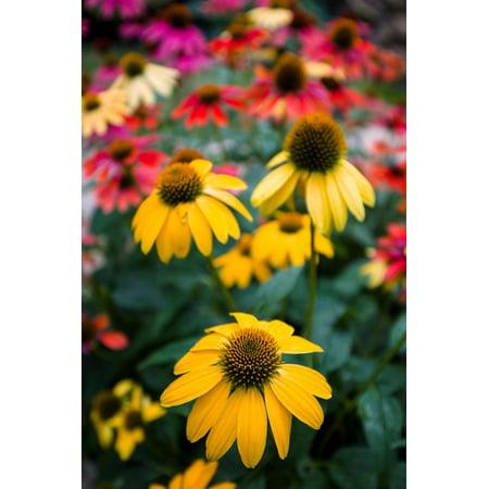 View of flowers in a garden, Garden Walk Buffalo, Buffalo, Erie County, New York State, USA Print Wall - Halloween Parties In Buffalo New York