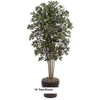 Autograph Foliages W-60275 10 ft. Black Olive Tree, Green