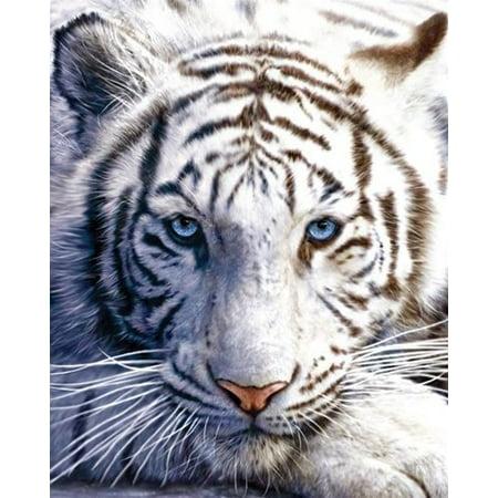 CADecor Blanket Funny White Tiger Animal Fleece Throw Blanket 58x80 inches Acrylic Mink White Tiger Blanket