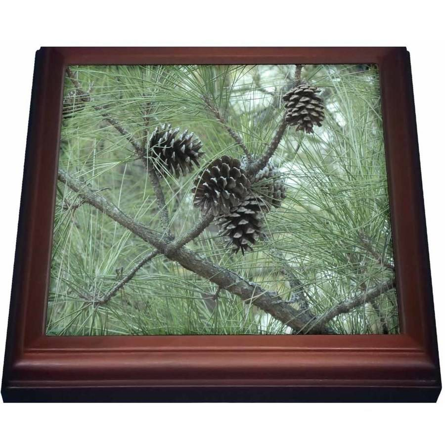 3dRose pine cones, Trivet with Ceramic Tile, 8 by 8-inch