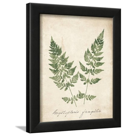 Vintage Ferns VII no Border Framed Print Wall Art By Wild Apple Portfolio