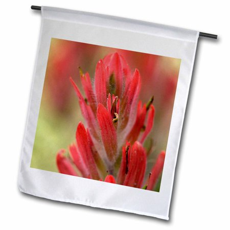 3dRose Indian Paintbrush, Scarlet Paintbrush, Flower - NA01 FZU0005 - Frank Zurey - Garden Flag, 12 by 18-inch