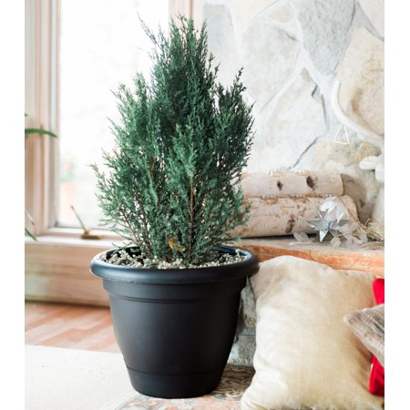 "Bloem Lucca Self Watering Planter 16"" Black"