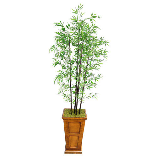 Laura Ashley by Vintage Home 91-in Tall Natural Bamboo Tree in 16-in Fiberstone Planter 36L 36W 91H