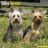 Silky Terrier Calendar 2018 - Dog Breed Calendar - Wall Calendar 2017-2018