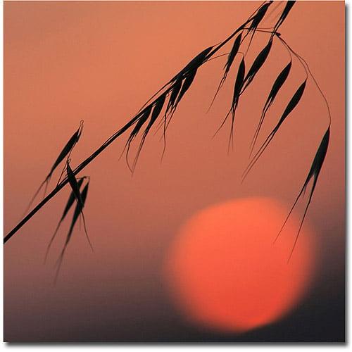 Trademark Fine Art 'Sunset Sonata' Canvas Art by Beata Czyzowska