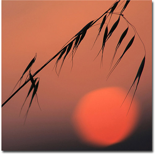 Trademark Fine Art 'Sunset Sonata' Canvas Art by Beata Czyzowska