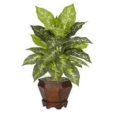 Image of Foliage Dieffenbachia In 10in Pot