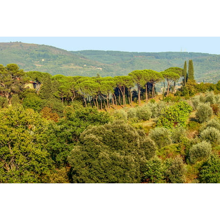 Framed Art For Your Wall Toscana Landscape Italy Chianti Tuscany 10x13 (Chianti Italy Framed)