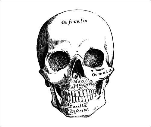 Tattify Skull Temporary Tattoo