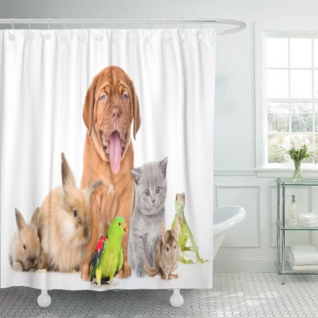 PKNMT Red Dog Group of Pets Together in Front View White Cat Funny Animal Family Rabbit Waterproof Bathroom Shower Curtains Set 66x72 inch