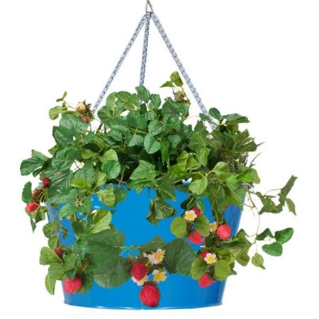 Hanging Strawberry Planter - Houston International Trading 8495E B Enameled Galvanized Hanging Strawberry & Flower Planter, Blue